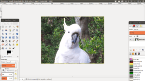 Cockatoo head opened in GIMP Scaled
